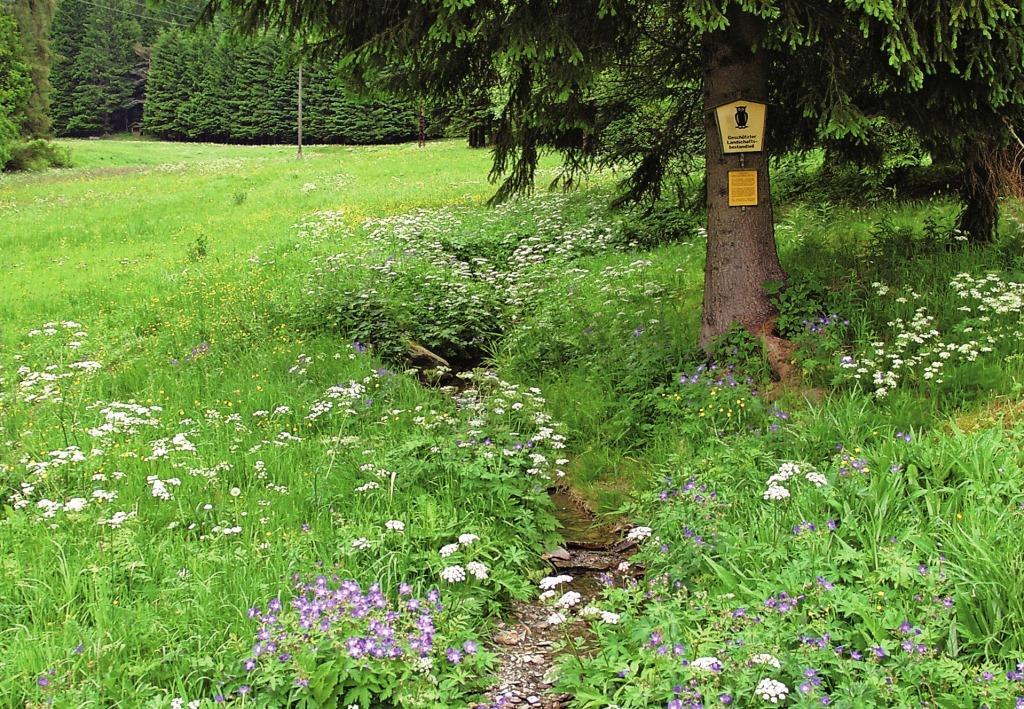 Grünland am Mellenbach