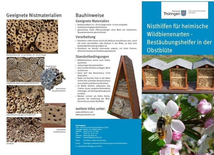 Flyer Wildbienen