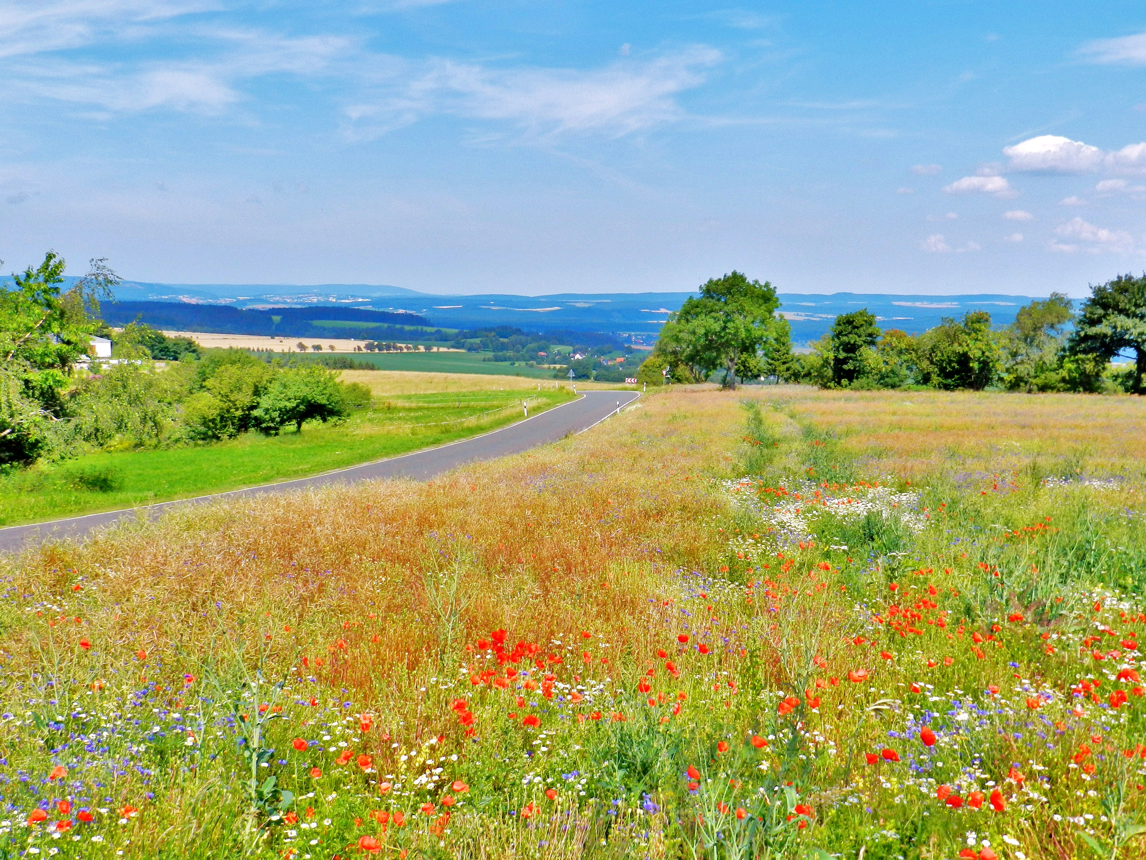 Grünlandförderung in der LEADER Region - Landwirtschaftsbetriebe haben Projektidee eingereicht