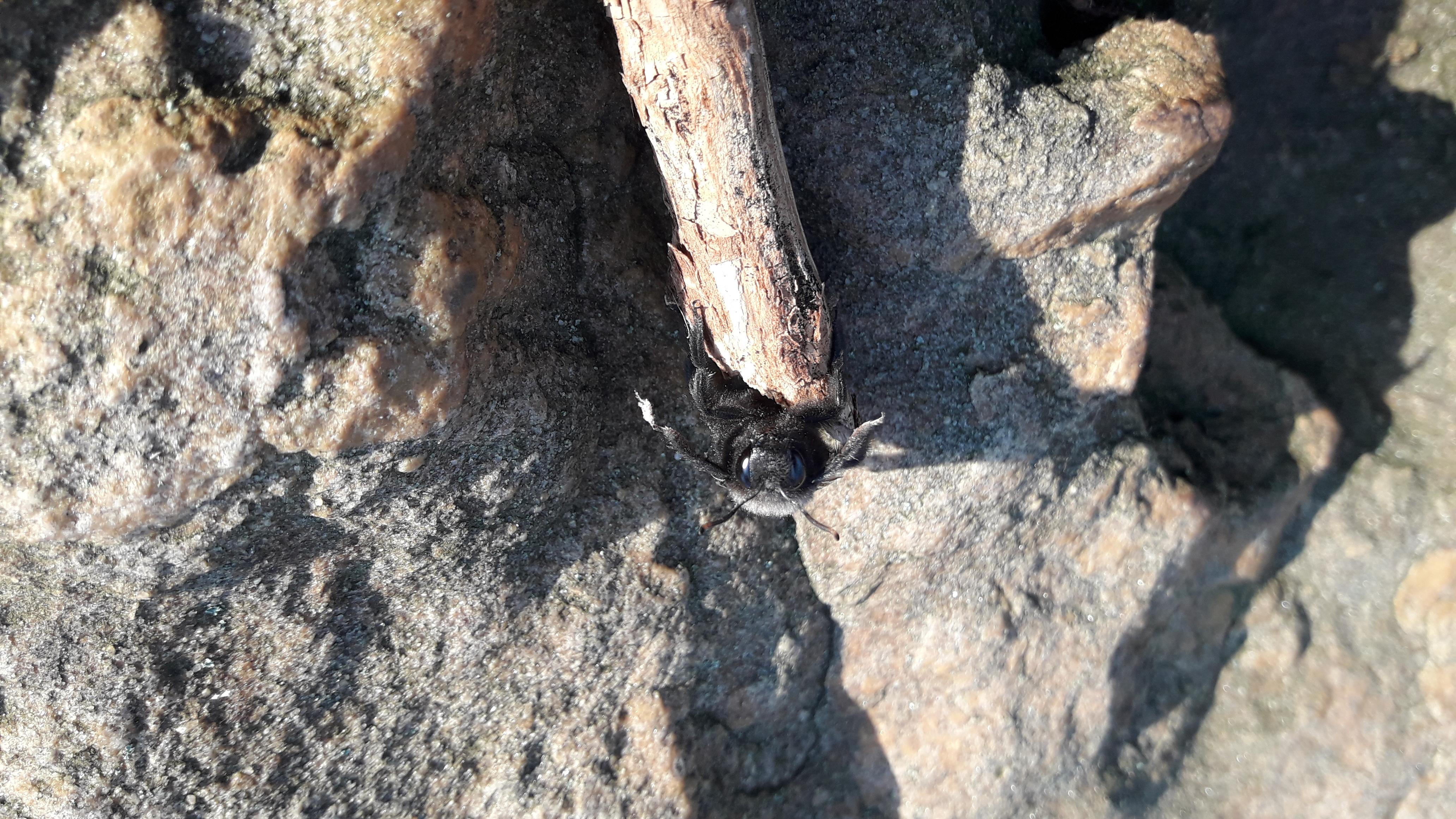 Unter den Projektskizzen: Bienennetzwerk Saalfeld / Foto: Ines Kinsky